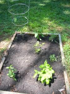 Sandbox Garden