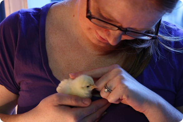 holding a baby leghorn chick